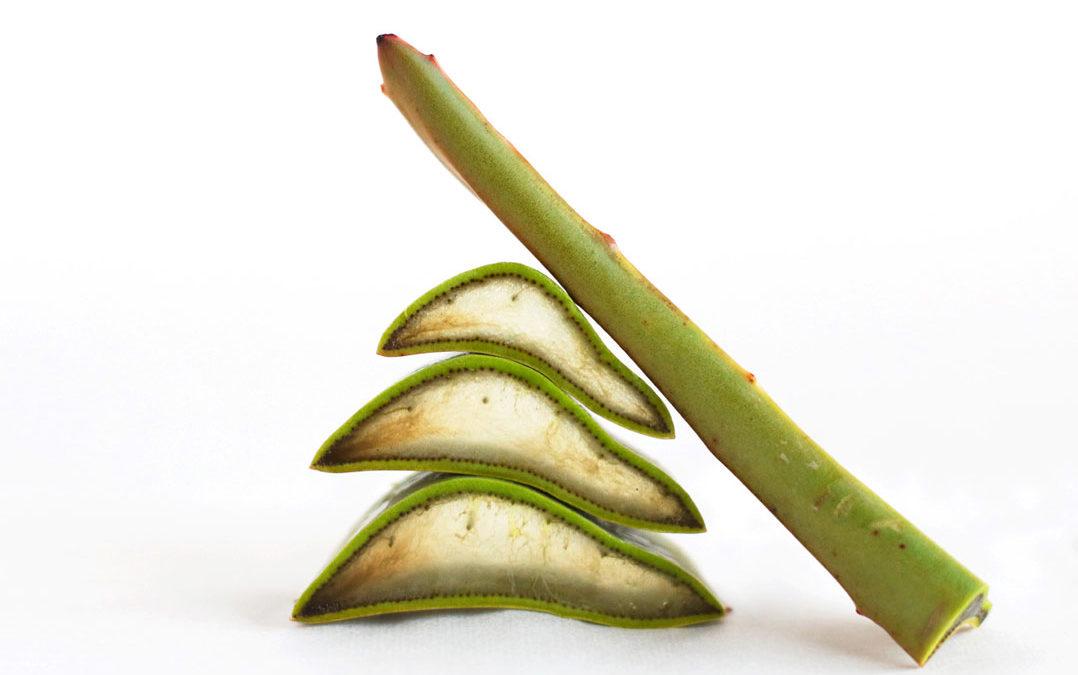 Aloe Vera, magnífico superalimento regenerador celular.